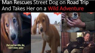 Man Rescues Street Dog on Road Trip And Takes Her on a Wild Adventure   ALASKA