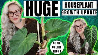 House Plant Growth Update & Best Online Plant Shops | #SexyTime