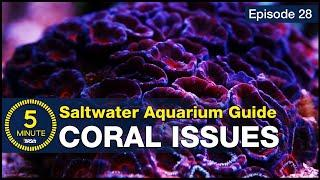 Are your corals dying? The four causes and solutions for saving your corals and reef tank