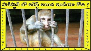 Top 10 Interesting and Amazing Facts in 2020||Top10 unknown facts in Telugu||Top10 best unknownFacts