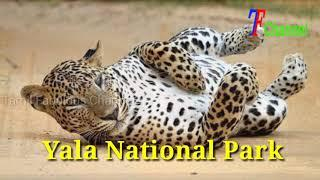 Sri Lanka Top 10 Beautiful Places | Place to Visit in Tamil | @Tamil Fabulous Channel