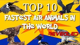 Top 10 Fastest Air Animals In The World | T10 REVEALED