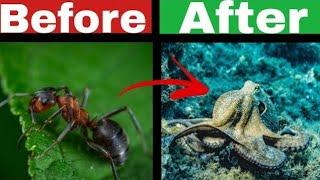 Ant to octopus