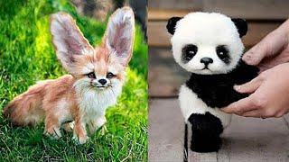 10 Cutest Baby Animals You Need To Pet | TOP 10 WORLD