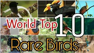 Top 10 Rare Birds Amazing Birds And his Information || Duniya k sb sy rare birds 2020