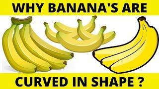 Why Banana's are Curved in Shape? Top 10 Amazing Facts