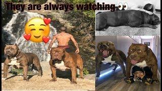This is Why Dogs are mans best friend!  AMAZING!