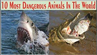 10 Most Dangerous Animals || Top 10 Most Dangerous Animals in the World - Center Point