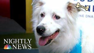 Shelter Dogs Play In The Dog Bowl In Hopes Of Finding Their 'Forever Homes'   NBC Nightly News