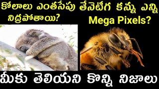 Amazing 10 Facts In Telugu |Top 10 Unknown  Facts In Telugu | Vlogger Hari