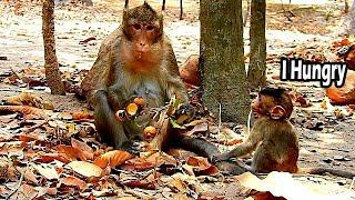 alba Really Hungry She Sit Beg Longan From Anna | Young Mum Anna So Selfish Don't Share Food To Alba