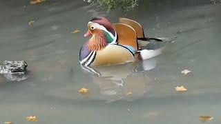 Top 10 HD wondering Water birds in the world with name & beautiful music