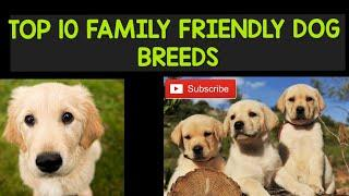 TOP 10 FAMILY DOG BREEDS