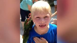 Awesome 1-Hour Funny Videos of Cute Kids And Pets