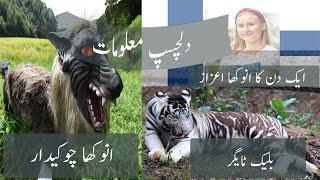 Top |interesting| information, Black |tiger| 1-day |chief minister| robotic |wolf| youngest |pm|