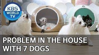 Problem in the house with 7 dogs [Dogs are incredible/ENG/2020.02.25]