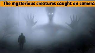The mysterious creatures caught on camera (Tamil)