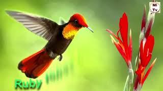 Beautiful birds/top 10 beautiful birds/information for birds /must watch
