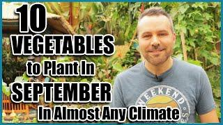 Top 10 Vegetables to plant in September