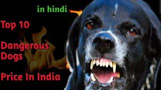 Top 10 Dangerous Dogs Price in India in hindi - Dogs Biography.