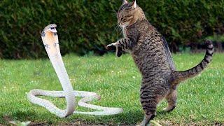 10 Batalhas Épicas de Animais Gravadas Em Vídeo