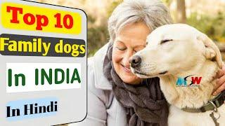 Top 10 family dogs in INDIA in hindi ! dog facts ! popular dogs ! my smart world