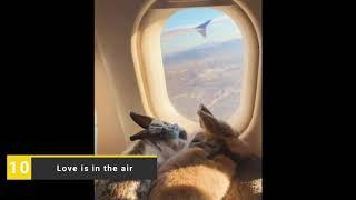 Top 10 viral video of the month January 2020
