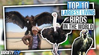 Top 10 | Largest living birds in the word/top 10 biggest birds in the world