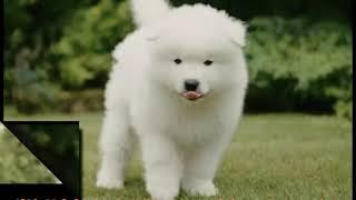 Top Dogs In The World   best guard dogs   Information by cvtz and family