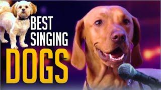 6 Best Singing Dogs EVER On Got Talent But Which Dog WINS? [Bonus Audition From AGT Season 15]