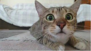 Funny Cats Compilation 2016 - Best Funny Cat Videos Ever