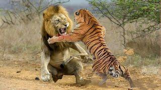 9 Batalhas Épicas de Animais Gravadas Em Vídeo 2