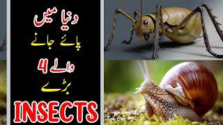 4 biggest bugs in the world | Top Information about Bugs