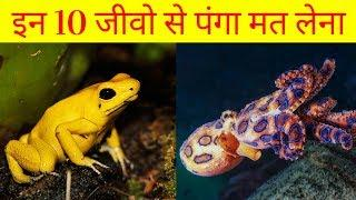 Top 10 most dangerous animals on the earth | 10 खतरनाक जानवर | gamma fact