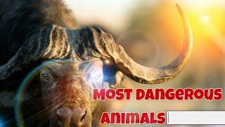 Top 10 Most Dangerous Animals In The World |Beast Creatures