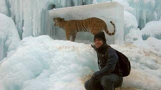 5 चौकादेनेवाले जानवर जो बर्फ में जमे हुए मिले | Top 10 Animals Found Frozen In Ice