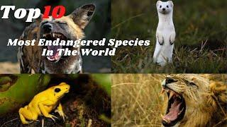 The Top 10 Most Endangered Species In The World | 10 Top Information