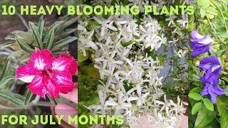 10 Heavy blooming flower plants for the month of July