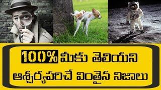 Top 10 unknown facts in Telugu | mind blowing & interesting facts Telugu | facts buddy Telugu