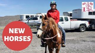 BEST WAYS TO GAIN A STRONG RELATIONSHIP WITH A NEW HORSE