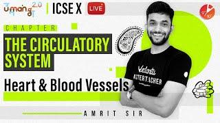 The Circulatory System L2 | Heart and Blood Vessels | ICSE Class 10 Biology | Umang Vedantu Class 10