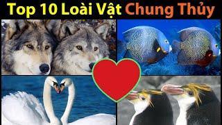 Top 10 Loài Vật Chung Thủy Nhất Thế Giới || TOP 10 Animals Most Faithful to their Mates