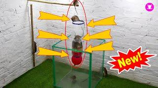 Easy Mouse Trap | Simple Mouse Traps With Balloons And Water Bottles | Top 10 Mouse Trap | Trap 2020