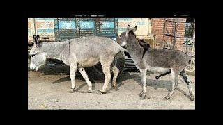 Amazing TOP 10| Street donkey super meeting