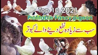 Top10 Profitable Fancy Birds Malik Majid Officals Latest 2021 Birds Love Information
