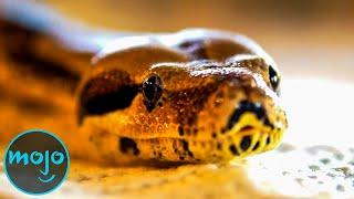 Top 10 Real Life Snake Attack Stories