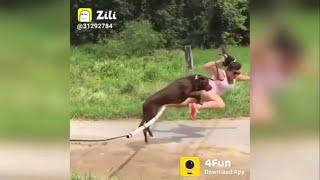 ZILLI TOP FUNNY VIDEOS   funny fails video 2020 Try not to laugh