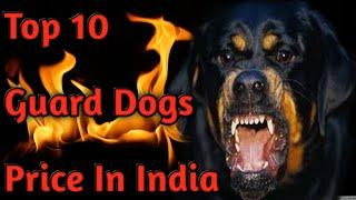 Top 10 Guard Dogs Price In India || origin & Life Span - Dogs Biography