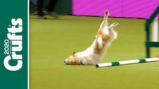 Oops! Our favourite Crufts bloopers over the years