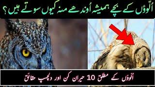 Top 10 Amazing Facts About Owls |Top 10 Intresting Facts | Urdu  Hindi | AM VOICE URDU